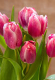 Pink tulip bouquet  isolated . Royalty Free Stock Photography