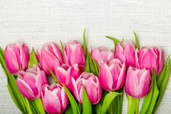 Pink tulip bouquet on light background,. Copy space Stock Images