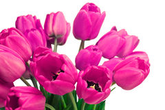 Pink Tulip Bouquet. Pink tulips bouquet on white background. Soft focus Stock Photography