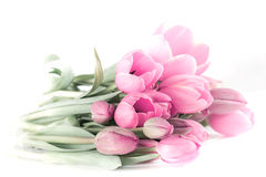 Pink tulip bouquet Royalty Free Stock Images