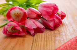 Pink tulip bouquet  . Stock Photo