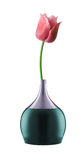 Pink tulip in bright vase Royalty Free Stock Photo