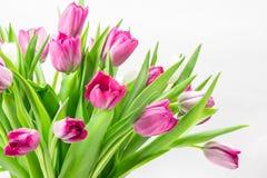 Pink tulip bunch close up Royalty Free Stock Photos