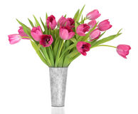 Pink Tulip Flower Beauty Stock Images