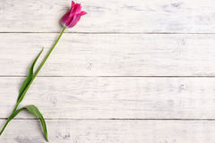 Pink tulip flower on wooden background. Top view, copy space. Royalty Free Stock Images
