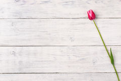 Pink tulip flower on wooden background. Top view, copy space. Stock Image