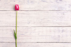 Pink tulip flower on wooden background. Top view, copy space. Stock Photo