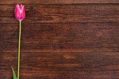 Pink tulip flower on wooden table background with copy space. Royalty Free Stock Images