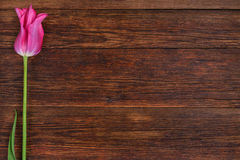 Pink tulip flower on wooden table background with copy space. Royalty Free Stock Photos