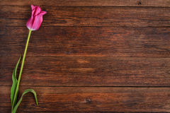 Pink tulip flower on wooden table background with copy space. Stock Photos