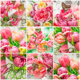 Pink tulip flowers and beautiful butterflies Royalty Free Stock Photos