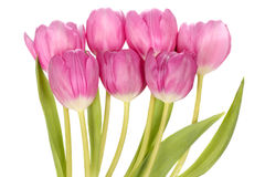 Pink tulip flowers bouquet Stock Photo