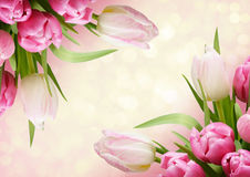 Pink tulip flowers corners Royalty Free Stock Images