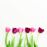 Pink tulip flowers isolated on white background. Flat lay. Top view Stock Image