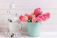 Pink tulip flowers  in  mint color bucket and decorative  cage o Stock Images