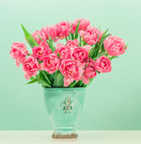 Pink tulip flowers over turquoise background Royalty Free Stock Image