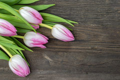 Pink tulip flowers Stock Images