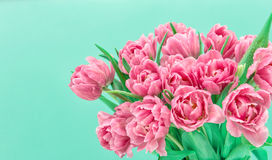 Pink tulip flowers with water drops over turquoise background. Spring bouquet Royalty Free Stock Photography