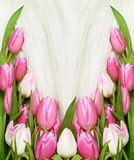 Pink tulip flowers on white tulle background. Top view. Flat lay royalty free stock photos