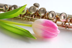 Pink tulip and flute Royalty Free Stock Photography