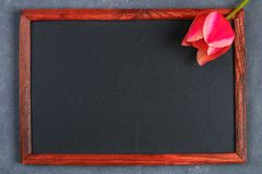 Pink tulip on a gray concrete background and chalk board. Pink tulip on a gray concrete background and chalk board royalty free stock images