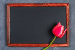 Pink tulip on a gray concrete background and chalk board. Pink tulip on a gray concrete background and chalk board royalty free stock image