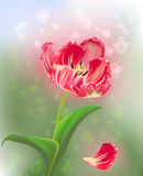 Pink tulip on green abstract light background Royalty Free Stock Image