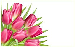 Gift frame with pink tulips Royalty Free Stock Image