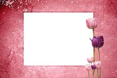 Pink Tulip Grunge Stock Photography