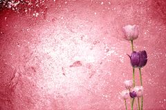 Pink Tulip Grunge Background Royalty Free Stock Photos