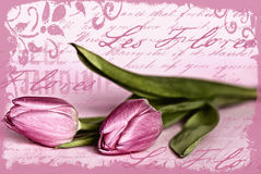 Pink tulip illustration Stock Photography