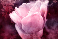 Pink tulip vintage design Royalty Free Stock Photography