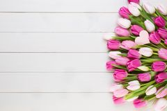 Pink tulip on the white background. Easter background. stock images