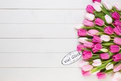 Pink tulip on the white background. Easter background. Stock Photo