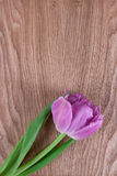 Pink tulip on a wooden background Stock Photography