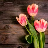Pink tulip on a wooden background Stock Photo