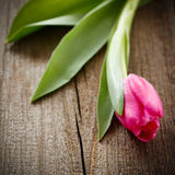 Pink tulip on wooden board Royalty Free Stock Photos