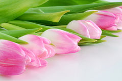 Pink tulips. A number of pink tulips Stock Images