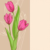 Pink tulips. On beige background Royalty Free Stock Images
