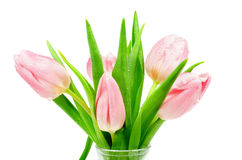 Pink Tulips Stock Photos