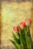 Pink Tulips Art. Photo art image of details of beautiful pink tulips with vintage grunge background Royalty Free Stock Photography