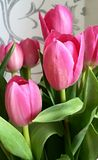Pink tulips. Royalty Free Stock Image