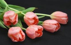 Pink Tulips on Black Stock Image
