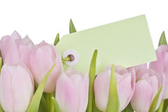 Pink tulips and blank note Royalty Free Stock Photos