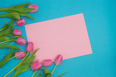 Pink tulips on blue background Stock Images