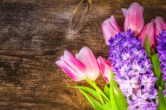 Hyacinths and tulips royalty free stock photo