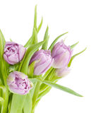 Pink tulips bouquet Stock Image