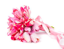 Pink tulips bouquet Royalty Free Stock Photos
