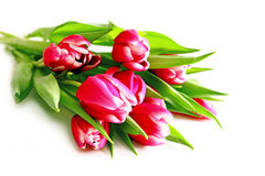 Pink tulips bouquet. Stock Images