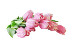 Pink tulips bouquet isolated on white background. Spring flower . Royalty Free Stock Image
